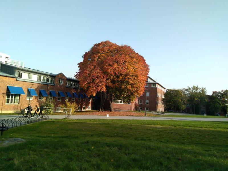 Autumn KI